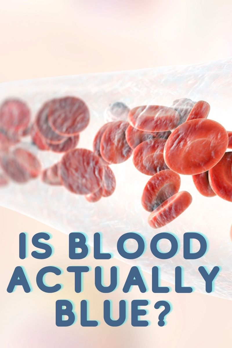 Is Blood Actually Blue?
