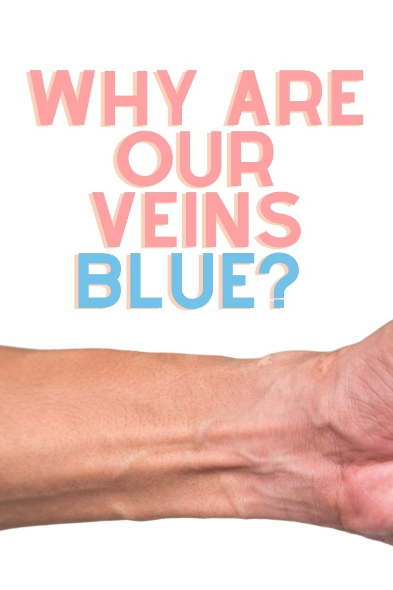 Why Are Our Veins Blue If Blood Is Red?